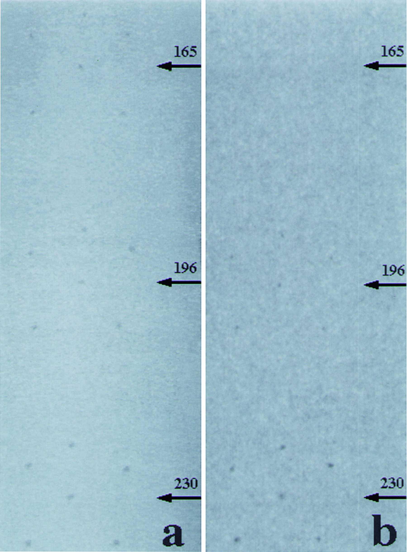 First Synchrotron Radiation Kifigmag